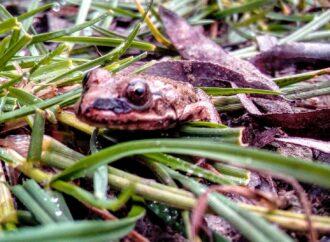 Из-за теплой зимы в водоемах Одесской области не впали в спячку рыба и лягушки
