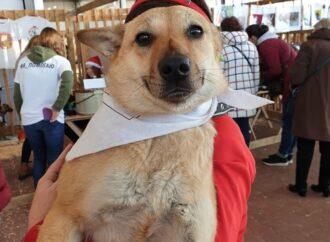"""""""Home me"""": добросердечные одесситы пришли на фестиваль животных, чтобы приютить собак и кошек"""