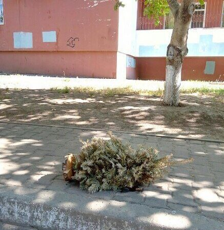 Власти Одессы нашли способ разобраться с елочными свалками (видео)