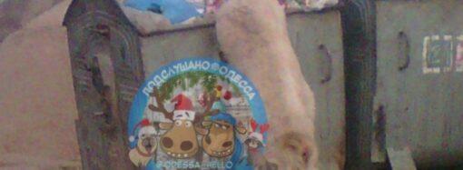 По одесской Аркадии разгуливал голодный козел (фото)