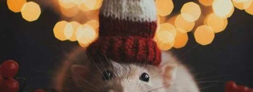 Новогодняя авторская колонка: Ваше Високосное Крысячество!