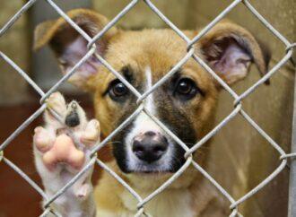 За жестокое обращение с животными в Украине теперь грозит тюрьма