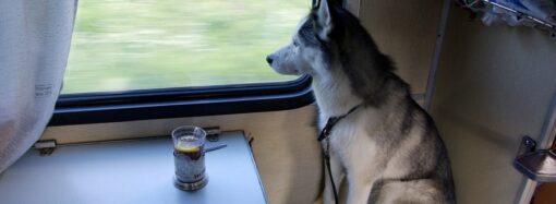 Что надо знать, путешествуя поездом: новые правила перевозки багажа