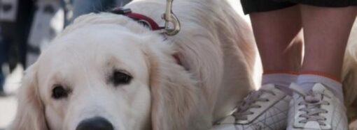 Одягніть тваринам намордники: в одному із парків Одеси невідомі труять собак (відео)