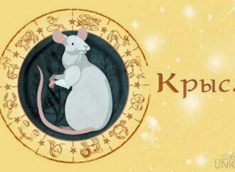 Восточный гороскоп на 2020 год: что по китайскому Зодиаку сулят звезды в год Крысы