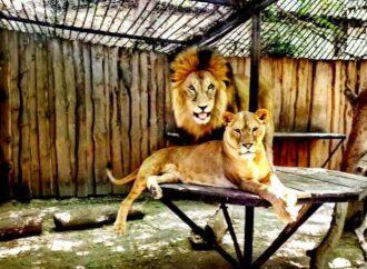 Пара року: до Дня закоханих в Одеському зоопарку оголосили романтичний конкурс