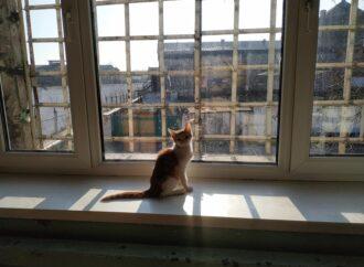 Усюди коти, а умови бажають кращого: як міністр юстиції несподівано відвідав Одеський СІЗО (фото)