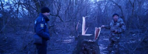В Одесской области спилили на дрова деревья вдоль оросительных сетей (фото)