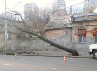 От сильного ветра в Одессе падают деревья (фото)