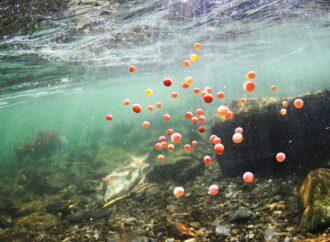 В водоемах Одесского региона рыба готовится к нересту