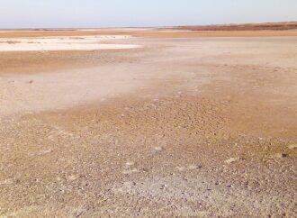 В нацпарке под Одессой высохли водоемы, где обитали птицы с потомством