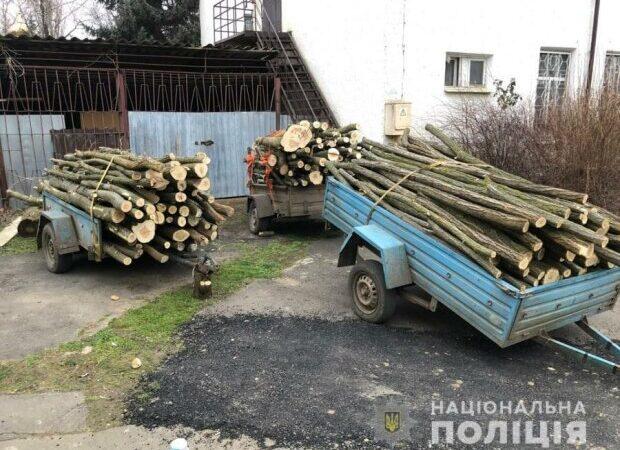 Под Одессой правоохранители задержали браконьеров, пиливших деревья в лесополосе