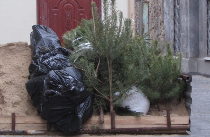 Не выбрасывайте елки: как одесситы меняют хвойные деревья на шоколадки (фото)