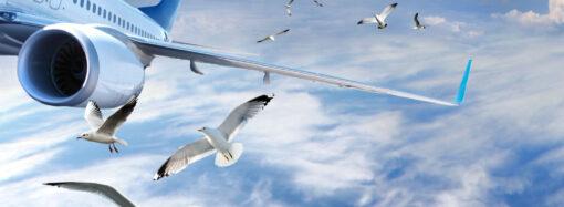 В Одессе птица задержала самолет на Вену