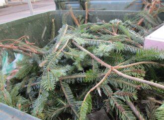 Началось: одесские альтфатеры стали «пополняться» елками