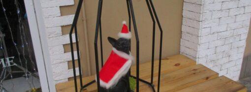 Одесский кот Трушный Татушный красуется в костюме Санта-Клауса (фото)