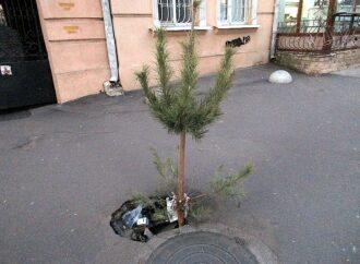 Одесситы избавляются от елок оригинальным способом (фото)