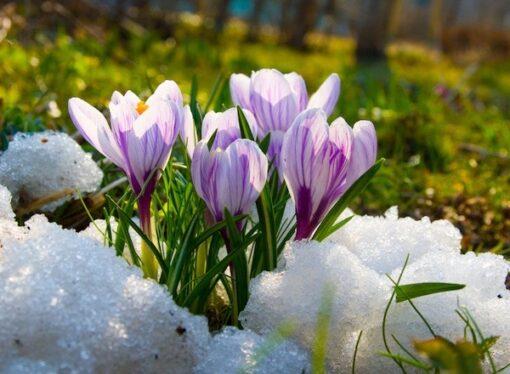 Весна в феврале и заморозки в марте: что обещают синоптики украинцам?