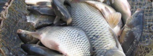 Браконьеры в Одесской области наловили рыбы на 72 тысячи гривен