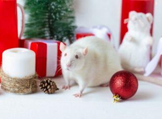 Новый год по-китайски: как приручить Белую Крысу
