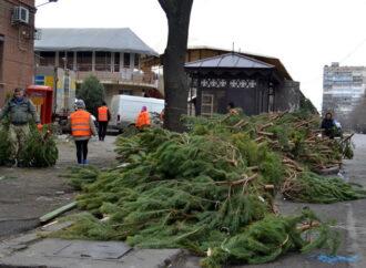 Торговцев елками в Одессе обяжут убирать за собой после Нового года