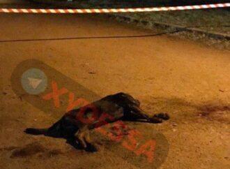 В Одессе пристрелили пса, который искусал хозяйку и напал на полицейских (видео)