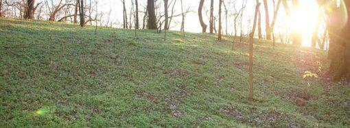На юге Одесской области показали поросшие зеленью зимние склоны (фото)