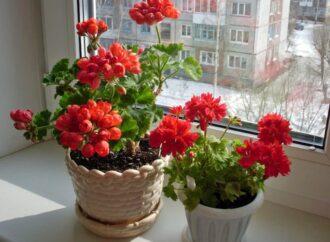 Оранжерея на подоконнике: растения для счастья и удачи