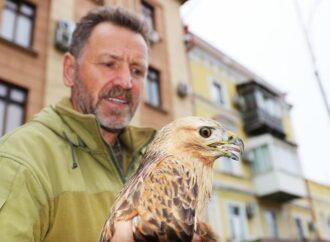 В нацпарке под Одессой спасают краснокнижную птицу (фото)