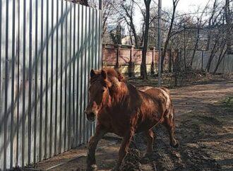 З Одеського зоопарку втік робочий кінь Боня (відео)