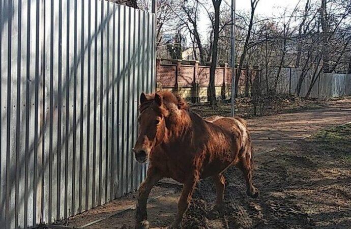 Что произошло в Одессе 11 февраля: побег коня из зоопарка и пропавший моряк