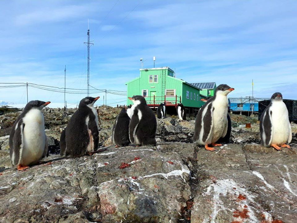 пінгвіни, Антарктида