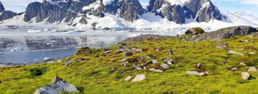 Антарктида трохи схожа на Одесу: одесит показав вражаючі фото з експедиції до Антарктиди