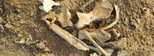 В одесском парке строили дорогу и нашли человеческие кости (фото, видеокомментарий)