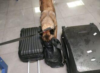 Знайшла «сувенір бадьорості»: одеські митники розповіли про одну із службових собак