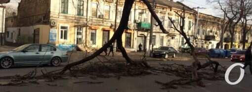 Древопад в Одессе: что нужно сделать, чтобы деревья не становились катастрофой для жителей города?
