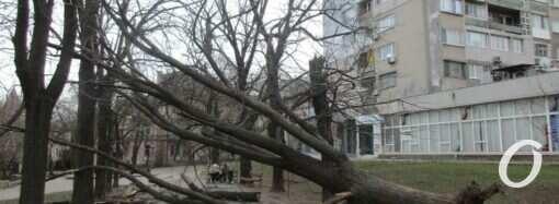 Что произошло в Одессе 25 февраля: последствия урагана и вырубка деревьев ради строительства дорог