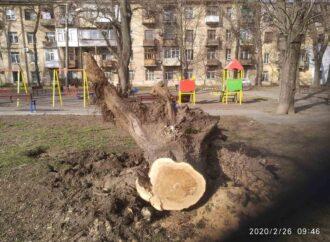 Последствия урагана в Одессе: осталось вывезти более 30 деревьев