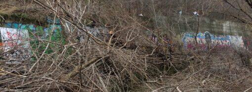 Какой ущерб Одессе нанесли вандалы, срубившие деревья на склонах?