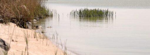 В одесской обладминистрации поделились планами по обновлению придунайских водоемов