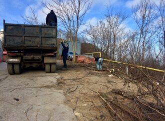 На месте вырубки деревьев на одесских склонах орудует строительная техника (фото)