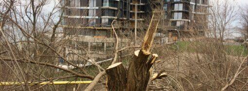 На приморских склонах в Одессе уничтожают деревья: кому и зачем это нужно? (фото)