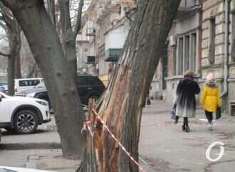 Центр Одессы после урагана: самое опасное — треснувшие деревья