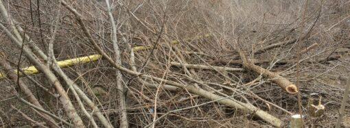 Сколько деревьев уничтожили на склонах в Одессе?