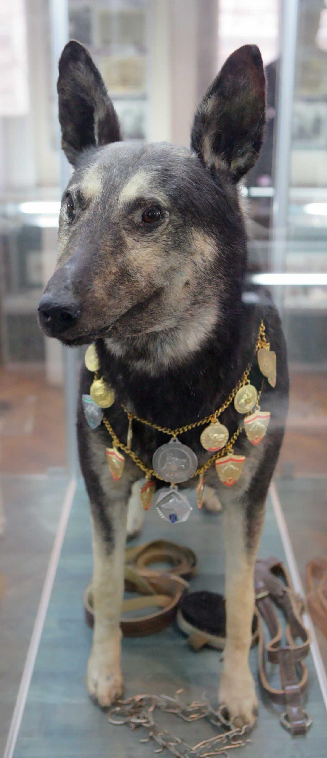 Заслуженный пес Рим
