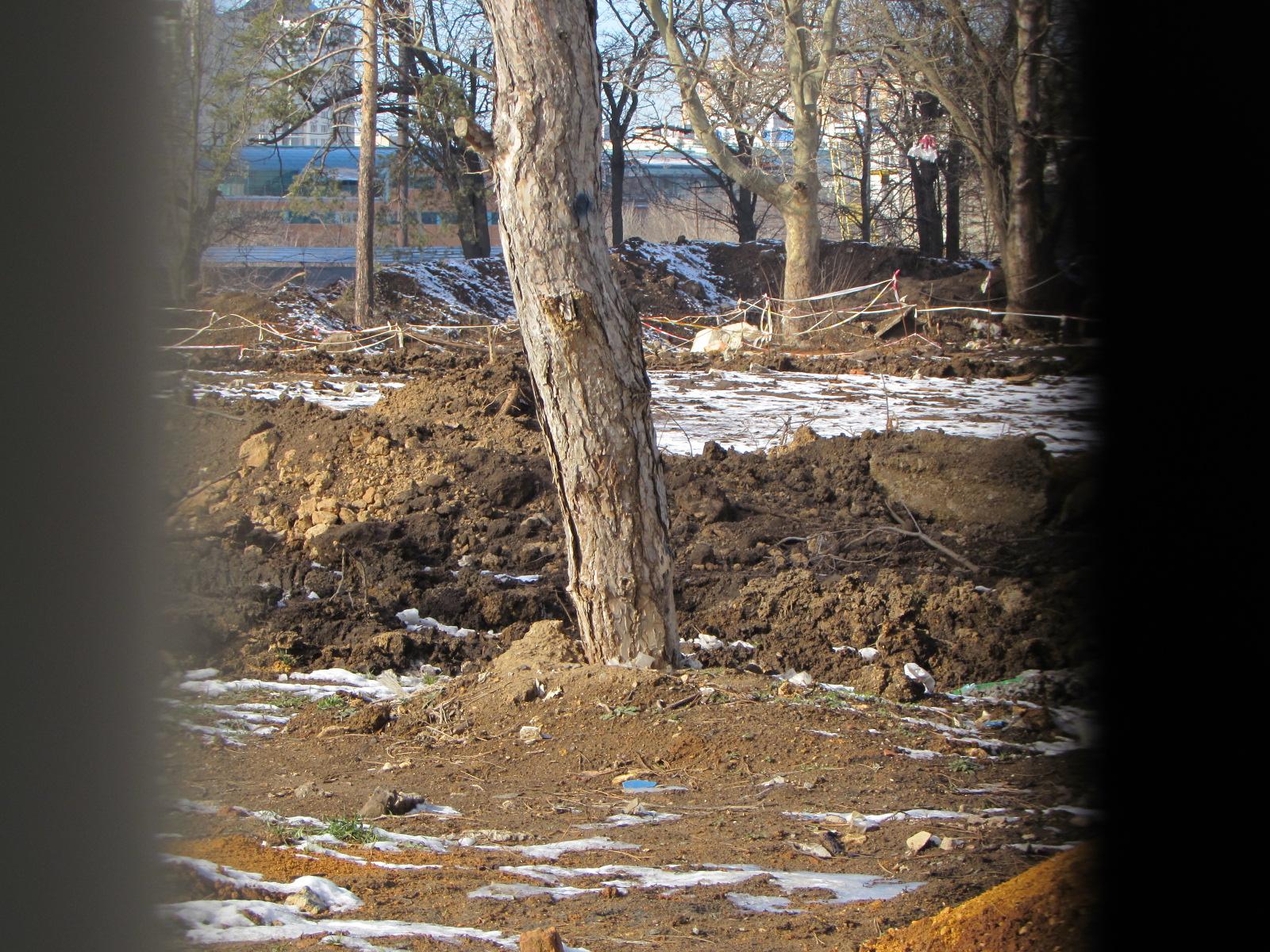 Зеленые насаждения расположены в зоне проведения строительных работ