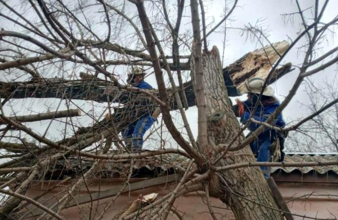 В Одесской области дерево рухнуло на газовую трубу
