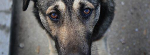 Где в Одессе стерилизовать бродячее животное?