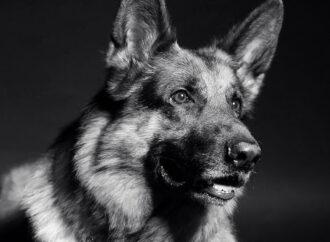 Где в Одессе выдрессировать собаку?