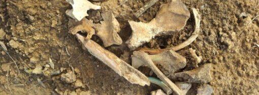 Дорога на костях: в парке у одесского Привоза идет стройка на месте бывшего кладбища?